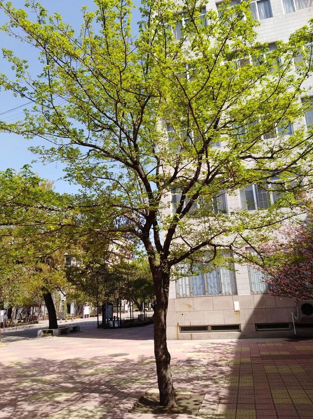"""传承广文·百年树人—到潍坊广文中学""""看树"""",感受生态校园!"""